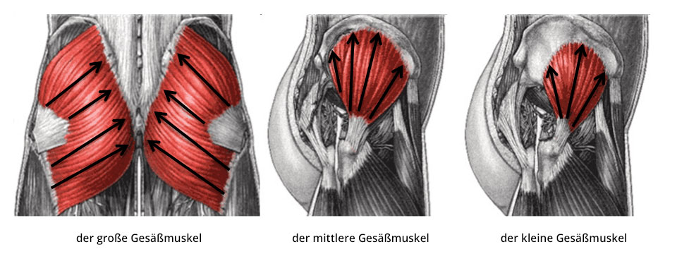 Gesäßmuskel