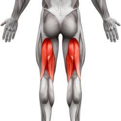 Hintere Oberschenkelmuskulatur