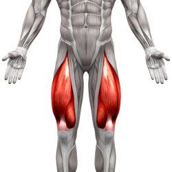 Vordere Oberschenkelmuskulatur