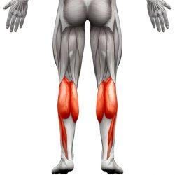 Wadenmuskulatur - Wadenmuskel