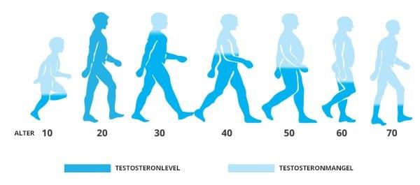 dass die Testosteron-Produktion mit den Jahren stark abnimmt