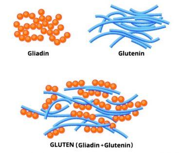 gliadine und glutenine