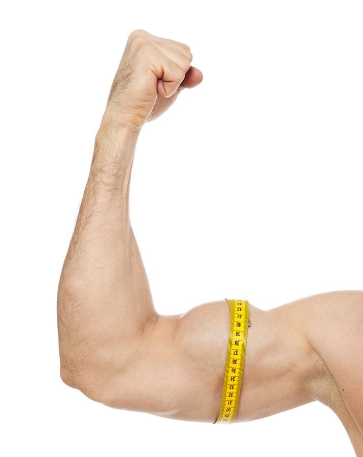 fördert hanteltraining den muskelaufbau